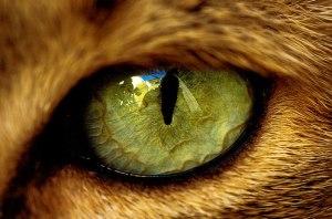 _ojo-de-gato